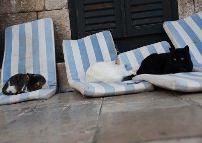 Katzenparadies à la Dubrovnik