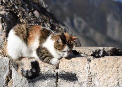 Kotor ist bekannt für seine Katzen