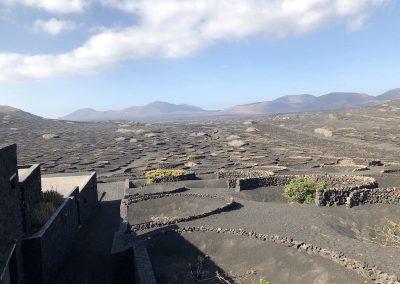 Karge Vulkanlandschaft - das Weingebiet von la Geria