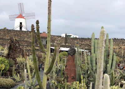 Kakteen-Garten in Guatiza