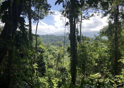 04.02.20 | Veragua Rainforest