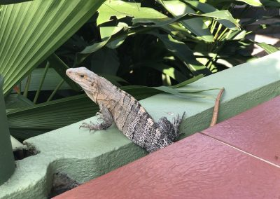 11.02.20 | Ein «gwunderiges» Tierchen vor unserer Zimmertür
